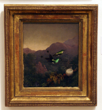 """Racket-tail, Brazil"" by Heade"