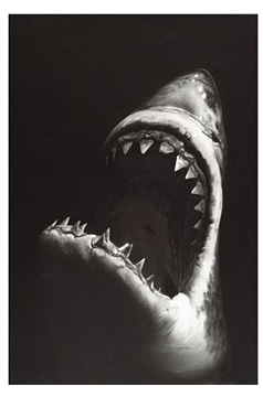 """Untitled (Shark 7)"" by Longo"